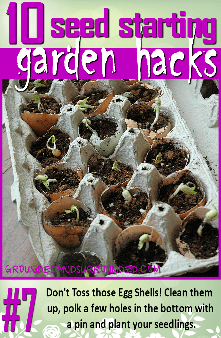 What a great way to use up egg shells! Just take your shell halves, poke a few holes in the bottom with a pin, and grow your seedlings in the egg carton. This is even more fun when you have added backyard chickens to your family! You won't want to miss the rest of our 10 Seed Starting Garden Hacks! These DIY tips and ideas will help you be the best gardener around!