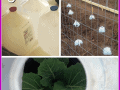 There are so many uses for milk jugs in the garden. My favorite use is to cut the bottom out and use them to protect fragile seedlings right after they are transplanted into the garden. I save milk jugs all year long and save money in my garden. You won't want to miss the rest of our 10 Seed Starting Garden Hacks! These DIY tips and ideas will help you be the best gardener around!