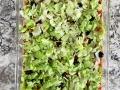 shredded-lettuce-on-top-of-appetizer