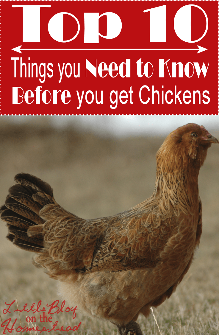 I love having my own chickens! But the process of deciding to get day-old chicks to building a coop to learning how to care for them has a steep learning curve. There are so many things I wish I would have known before I dove in head first. https://happihomemade.com/10-things-chickens-at-lboth/