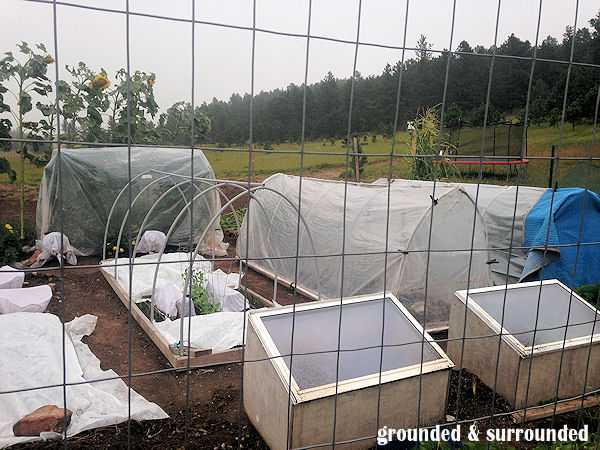 frugal gardening ideas | Shop your local RE-Store Outlet for wood scraps, items to re-purpose, and old windows. We found a couple of windows for $2.50 each last year and made cold frames out of them. I have also seen people make planters out of old bath tubs….. https://happihomemade.com/frugal-diy-garden-articles/