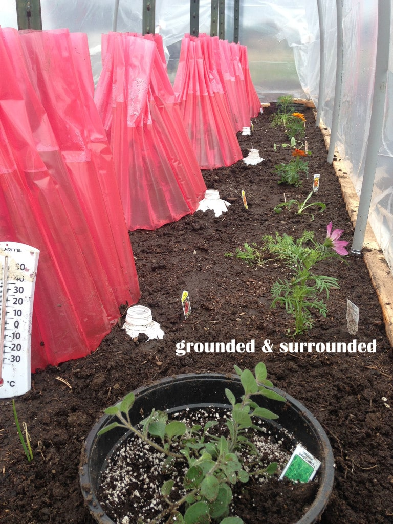 This one is genius, and it worked quite well for my tomatoes last season. Simply poke a bunch of holes in the bottom of a milk jug, and bury it beside your tomato transplants. When it is time to water, simply fill up the jug a couple of times and your tomato plants are in heaven! http://www.groundedandsurrounded.com/frugal-diy-garden-articles/