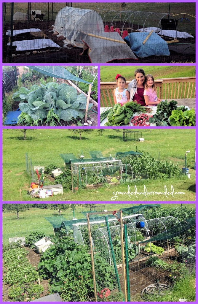 A photo collage of the planting and harvesting of a Zone 4a vegetable garden.