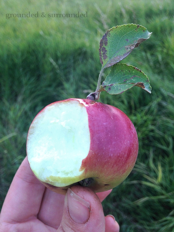 Ever since we decided to embrace country living, I have been dreaming of my very own orchard. But for now we are foraging for free fruit and learning how to preserve the bounty! You will also find my gluten-free healthy apple crisp recipe! https://happihomemade.com/recipe/i-dream-of-an-orchard/