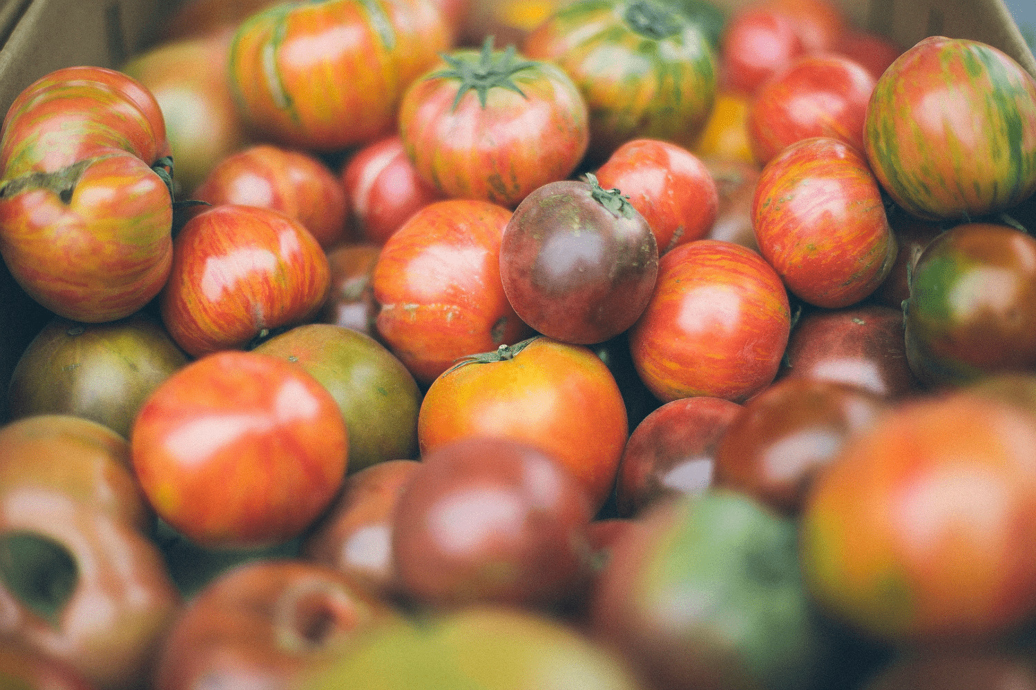 Heirloom tomatoes of every color and size.
